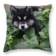 Adorable Alusky Puppy Hiding In A Garden Throw Pillow
