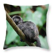 Adorable Black Goeldi's Marmoset Throw Pillow