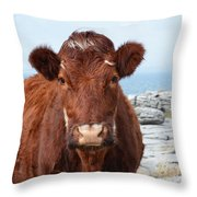 Adorable Brown Cow Standing On The Burren Throw Pillow