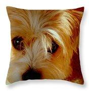 Adorable Daisy Throw Pillow