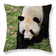 Adorable Face Of A Black And White Giant Panda Bear Throw Pillow