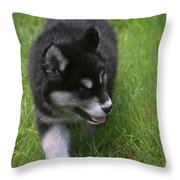 Adorable Fluffy Alusky Puppy Walking In Tall Grass Throw Pillow