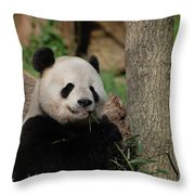 Adorable Giant Panda Eating A Shoot Of Bamboo Throw Pillow