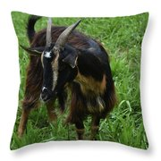 Adorable Goat In A Field With Thick Green Grass Throw Pillow