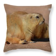 Adorable Pair Of Chubby Black Tailed Prairie Dogs Throw Pillow
