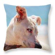 Adorable Small Dog On The Beach Throw Pillow