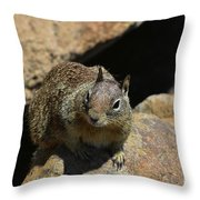 Adorable Up Close Look Into The Face Of A Squirrel Throw Pillow