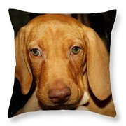 Adorable Vizsla Puppy Throw Pillow