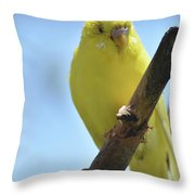 Adorable Yellow Budgie Parakeet Bird Close Up Throw Pillow