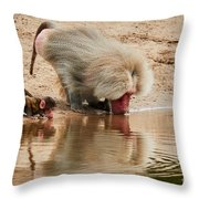 Adult Baboon And Baby Together On The Waterfront  Throw Pillow