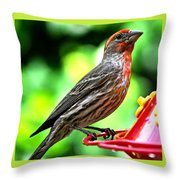 Adult Male House Finch Throw Pillow
