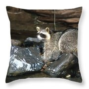 Adult Raccoon Hunting Throw Pillow