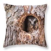 Adult Saw-whet Owl Throw Pillow