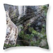 Adult Snow Leopard Standing On Rocky Ledge Throw Pillow