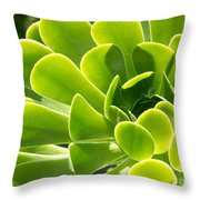 Aeonium Canariense Throw Pillow