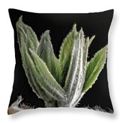 Aesculus Hippocastanum Horse Chestnut 2 Throw Pillow