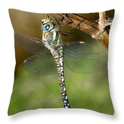 Aeshna Mixta Dragonfly Throw Pillow