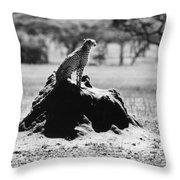 Africa: Cheetah Throw Pillow