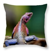 African Agama Lizard  Throw Pillow