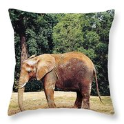 African Baby Throw Pillow