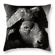 African Buffalo Bull Close-up Throw Pillow