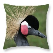 African Crowned Crane #7 Throw Pillow