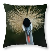 African Crowned Crane At The Omaha Zoo Throw Pillow