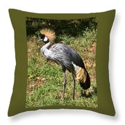 African Crowned Crane Poising Throw Pillow