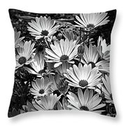 African Daisies In Black And White Throw Pillow