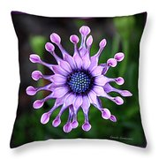 African Daisy - Hdr Throw Pillow