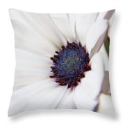 African Daisy  Sky And Ice Throw Pillow