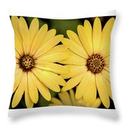 African Daisy-twice Throw Pillow