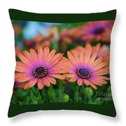 African Daisy Twins Throw Pillow