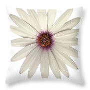 African Daisy With White Petals Throw Pillow