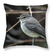 African Dusky Flycatcher Throw Pillow