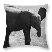African Elephant Calf Throw Pillow