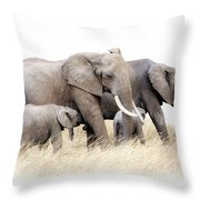 African Elephant Group Isolated Throw Pillow