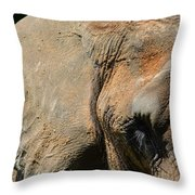 African Elephant Throw Pillow