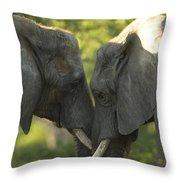 African Elephants Loxodonta Africana Throw Pillow