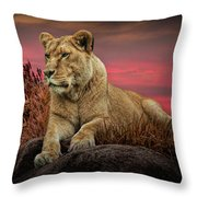 African Female Lion In The Grass At Sunset Throw Pillow