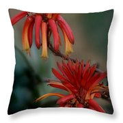 African Fire Lily Throw Pillow