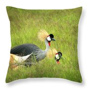 African Gray Crown Crane Throw Pillow