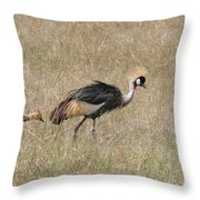 African Grey Crown Crane Throw Pillow