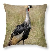 African Grey Crowned Crane Throw Pillow