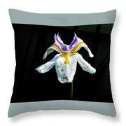 African Iris Raindrops Throw Pillow