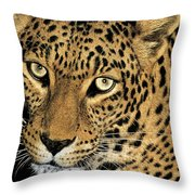 African Leopard Panthera Pardus Captive Wildlife Rescue Throw Pillow