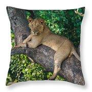 African Lion Panthera Leo On Tree, Lake Throw Pillow