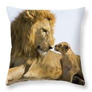 African Lion Panthera Leo Seven Throw Pillow