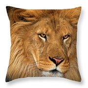 African Lion Panthera Leo Wildlife Rescue Throw Pillow