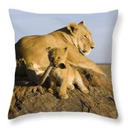 African Lion With Mother's Tail Throw Pillow by Suzi Eszterhas